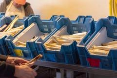 Промышленный обрабатывать и мыть белого овоща спаржи на аграрной ферме, подготовке для продажи стоковые изображения rf