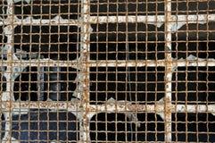 промышленный провод окна сетки Стоковое Изображение RF