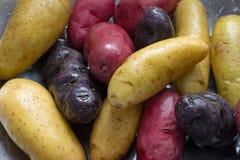 Прополосканные картошки fingerling в дуршлаге стоковое изображение rf