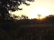 Проползите вверх на восходе солнца Стоковая Фотография RF