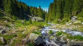 Пропуская заводь, скалистая долина, вечнозеленые деревья стоковое изображение