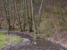 Пропуская поток в лесе Стоковая Фотография RF
