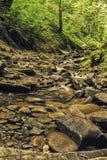 Пропуская река в лесе Стоковые Фото