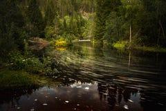 Пропуская река леса в Норвегии стоковое изображение rf