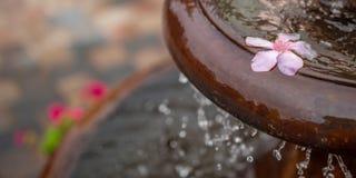 Пропуская фонтан с розовым цветком стоковое фото