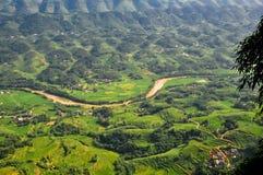 Пропуск rill через поле риса стоковое фото