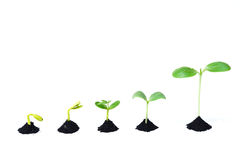 Прорастание семени Стоковые Изображения