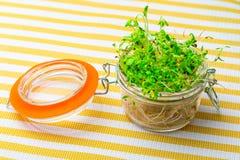 Проросл свежие и сырцовые ростки альфальфы Здоровый и здоровое питание стоковые изображения