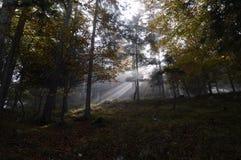 Прорыв Солнця Стоковые Изображения