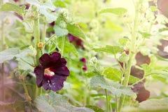 Просвирник цветка на черенок среди других идентичных заводов Стоковые Изображения