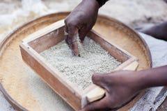 Просеивать зерно стоковые фотографии rf