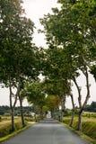 Проселочная дорога выровнялась с деревьями явора в южной Франции Стоковая Фотография RF