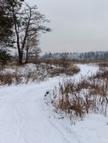 Проселочная дорога в зиме стоковое изображение rf
