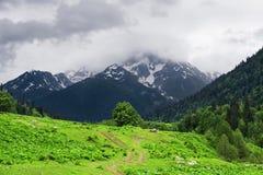 Проселочная дорога в Spring Valley в горах Абхазия стоковое изображение rf