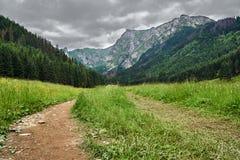 Проселочная дорога в Spring Valley в горах стоковая фотография