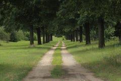 Проселочная дорога идя между строками деревьев Стоковое Изображение