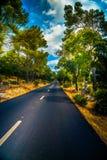 Проселочная дорога лета с деревьями Стоковые Изображения RF