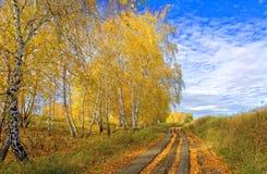 Проселочная дорога осени засорянная с упаденной листвой березы стоковая фотография rf