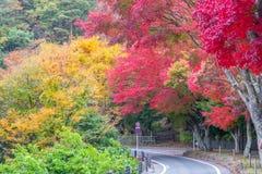 Проселочная дорога с красивой осенью стоковое изображение