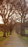 Проселочная дорога с неурожайными деревьями на обеих сторонах Стоковые Фотографии RF