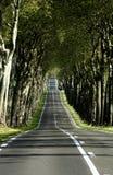 проселочная дорога Стоковое Фото