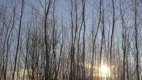Проселочная дорога Snowy в лесе акции видеоматериалы