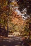 Проселочные дороги, Nikko Япония стоковые изображения