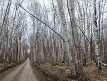 Проселочная дорога весной 2 Стоковое Фото