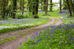 Проселочная дорога водя через сочный лес Bluebell в Ирландии стоковое изображение rf