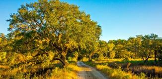 Проселочная дорога выровнянная с дубом trees Стоковые Фотографии RF