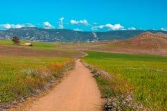Проселочная дорога в зеленом поле с темносиним небом Стоковое Фото