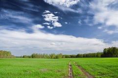 Проселочная дорога в зеленом поле Стоковая Фотография RF