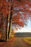 Проселочная дорога в осени Стоковое Фото
