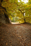 Проселочная дорога вдоль деревьев в сочном лесе Стоковые Фотографии RF
