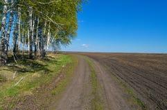 Проселочная дорога в поле около леса на солнечный день Стоковые Изображения