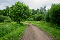 Проселочная дорога в пуще Стоковая Фотография RF