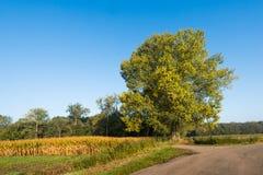 Проселочная дорога в сельском районе на солнечный день осени Стоковое фото RF