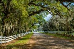 Проселочная дорога, испанский мох, Луизиана Стоковые Изображения RF