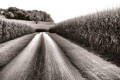 Проселочная дорога и высокорослые кукурузные поля в сельской Америке Стоковые Изображения RF