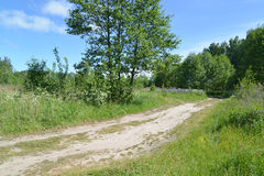 Проселочная дорога на крае леса Стоковое Фото