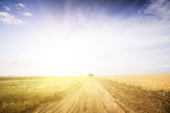 Проселочная дорога среди полей пшеницы. Стоковое фото RF