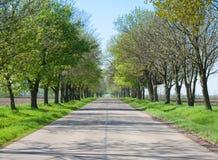 Проселочная дорога с деревьев началом вперед - весны Стоковые Фото