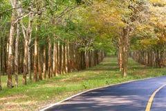 Проселочная дорога с резиновыми деревьями и знаками уличного движения Стоковое фото RF