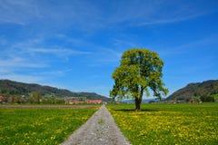 Проселочная дорога через аграрный край в лете Стоковое Изображение RF