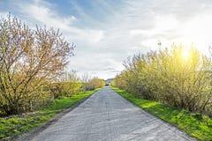 Проселочная дорога через лес и зеленые поля Стоковое Изображение