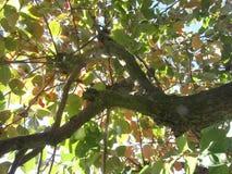 Просмотр через листья осени дерева хурмы цветы абстрактной осени яркие понижаются красный цвет картины листьев славный semi стоковая фотография rf