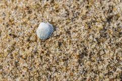 Простая белая раковина на крупном плане пляжа песка Стоковая Фотография RF