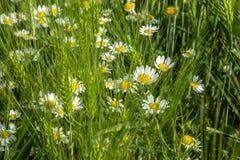 Простая красота весны Стоковые Изображения