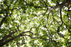 Простая предпосылка деревьев Стоковое Изображение