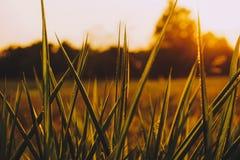 Простая трава Стоковые Фото